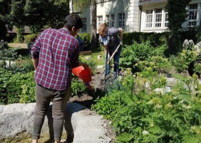 Gartenpflege_7